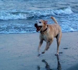 Sunny at the beach.