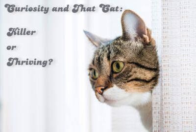 Curiosity did not kill the cat.  It helped the cat to thrive!